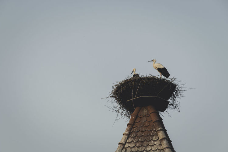 Low angle view of storks perching in nest on tower against clear sky