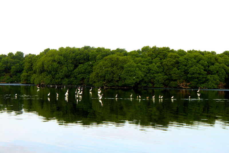 Birds haven island full of old mangroves near Manila. Beauty In Nature Birds_collection Calm Day Green Color Growth Idyllic Island Lake Lakes  Lush Foliage Mangroves Nature No People Non-urban Scene Outdoors Reflection Scenics Standing Water Swamp Tranquil Scene Tranquility Tree Water Waterfront