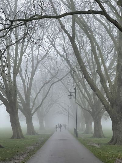 Empty road along bare trees during foggy weather