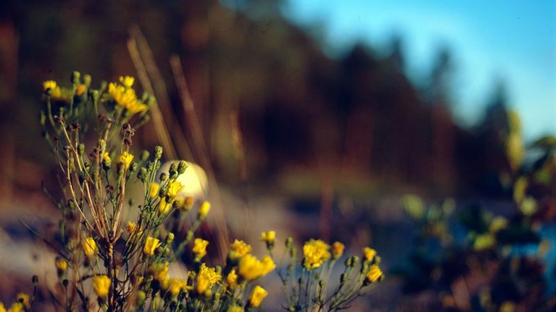 GRASS FLOWERS AWESOME LOVE PHOTOGRAPHY Beauty In Nature Blooming Blossom Botany Close-up Day Field Flower Flower Head Focus On Foreground Fragility Freshness Growing Growth In Bloom Nature No People Outdoors Petal Plant Pollen Selective Focus Stem Tranquility Yellow