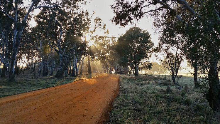 Early Morning Sunrays Eucalyptus Gravel Road TypicalAustralian Landscape EyeEm Nature Lover EyeEm Best Shots Exceptional Photographs The Great Outdoors - 2016 EyeEm Awards Australia EyeEm Best Shots - Nature AndroidPhotography Hello World Check This Out Eye4photography  In The Moment Victoria Australia❤️ The Nature Photographer - 2016 Eyeem Awards