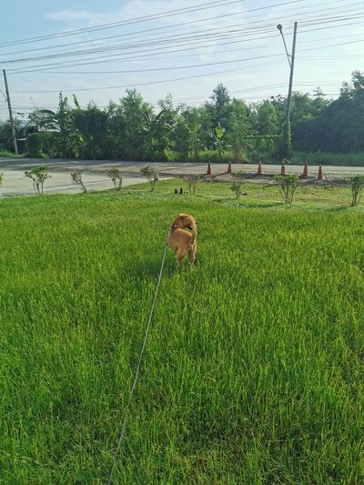 View of dog on grassy field against sky