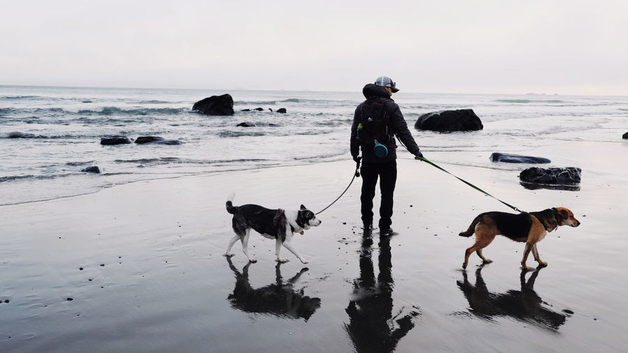 Full length of man with dogs at beach