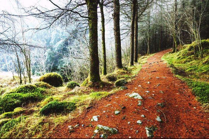 Tree Trunk Forest Tree Tranquil Scene Growth Nature Tranquility Beauty In Nature Moss Scenics Non-urban Scene WoodLand Footpath Day The Way Forward Branch Abundance Long Remote
