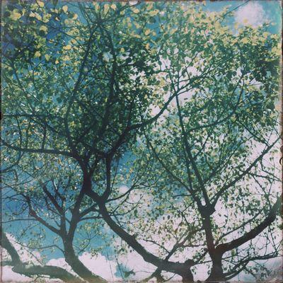 Hipstamatic Purehipstamatic Hipstamaticaddicts Tree