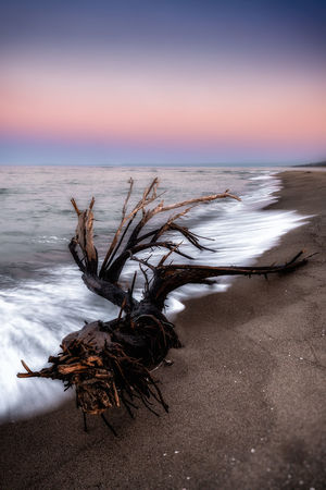 Tree Beach Beauty In Nature Climate Dead Plant Driftwood Horizon Horizon Over Water Land Longexposure Nature No People Outdoors Sand Sand Dune Scenics - Nature Sea Sky Sunset Tranquil Scene Tranquility Tree Tree On Sand Water Wood