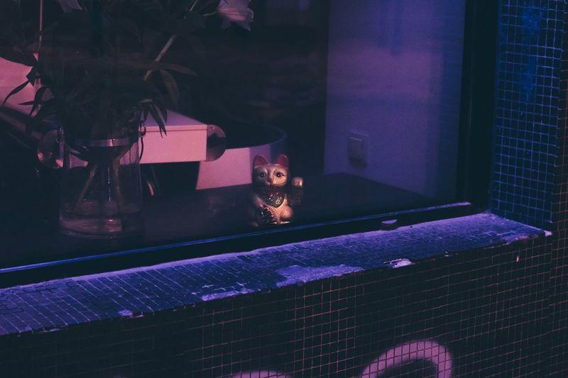 Close-up of artificial cat in illuminated room