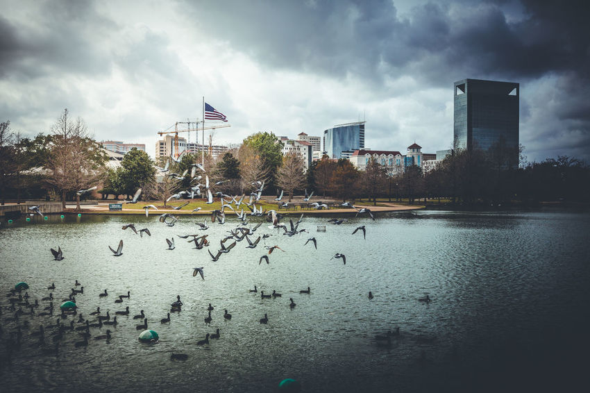 Architecture Bird Building Exterior Cloud - Sky Day Duck Flag Large Group Of Animals Nature Outdoors People Sky Water