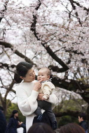 Adult Baby Bonding Branch Care Cheerful Cherry Blossom Cherry Blossom Viewing Day Family With One Child Females Happiness Holding Love Mother Daughter  Outdoors People Smiling Spring In Japan Springtime Togetherness Tree Waist Up Young Adult Young Women