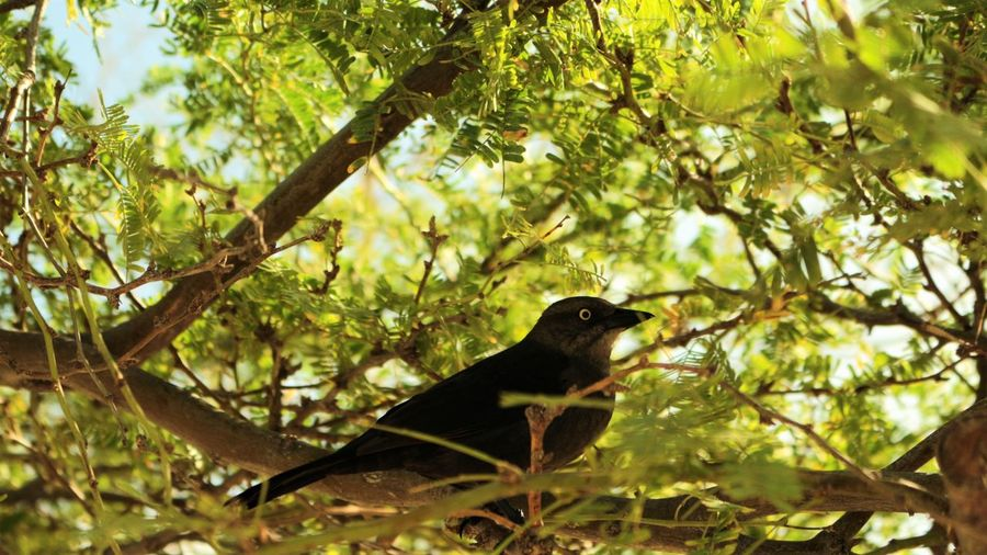 Low angle view of bird perching on branch in forest