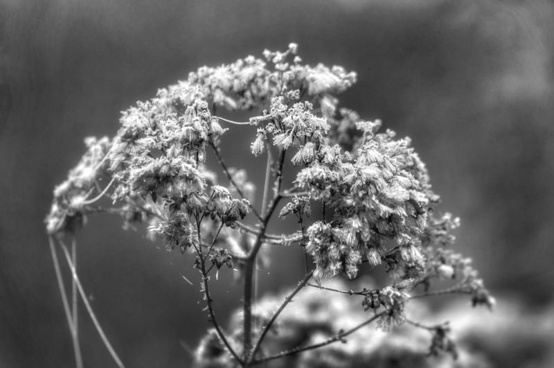 Ich denke zu viel. Ich sehe zu viel. Ich fühle zu viel, aber rede zu wenig . . . . . . . . . . I think too much. I see too much. I feel too much, but I do not talk too much My Picture 2018 Goodnight EyeEm Selects GERMANY🇩🇪DEUTSCHERLAND@ Malephotographerofthemonth Lausitzer Land EyeEm Germany Eiskristalle Cold Temperature Frosty Days Black And White Collection  Schwarzweißfotografie Winter Time Flower Tree Beauty Uncultivated Close-up Sky Plant Landscape Plant Life Frozen Snow Covered Frost Ice Crystal Weather Condition Ice Covering Cold