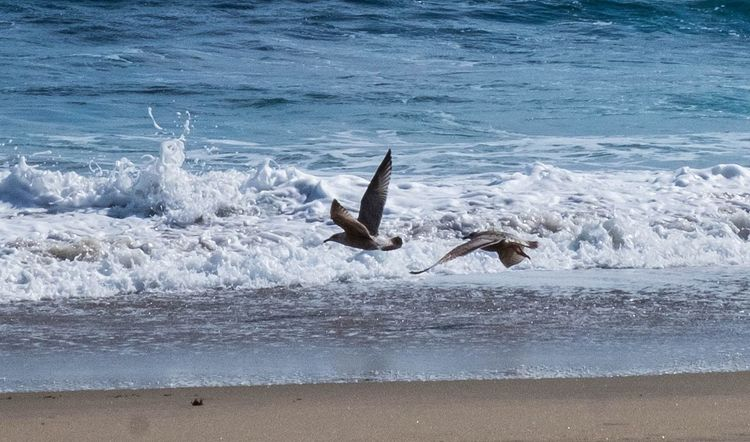 Sea Animal Themes Animals In The Wild Nature No People Bird Water Animal Wildlife Beach Outdoors Motion Day Wave Beauty In Nature Sea Life Close-up Photo EyeEmNewHere Beachphotography Photography Seaside Seasand Sky Horizon Over Water Extreme Close-up