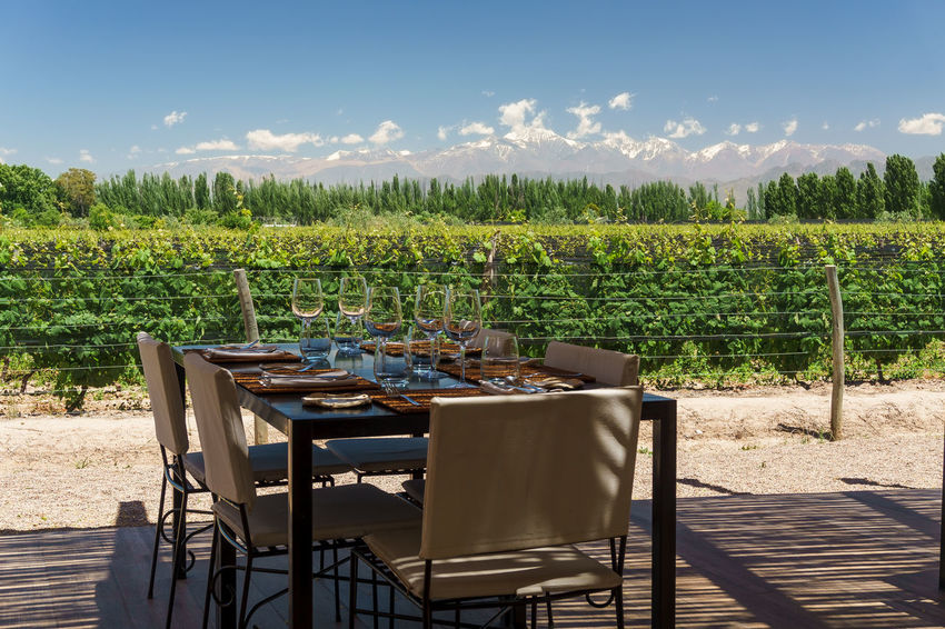 Al Fresco Dinner with Wine at a Vineyard in the Andes Mountains Al Fresco Dinner Lunch Table Wine Wine Glass Wine Glasses Mendoza Uco Valley Argentina Mountains Wine Andes Andes Mountains Vineyard Green Nature Beauty In Nature Blue Sky Dining Food And Drink Vegetable No People Outdoors Day Food Sky