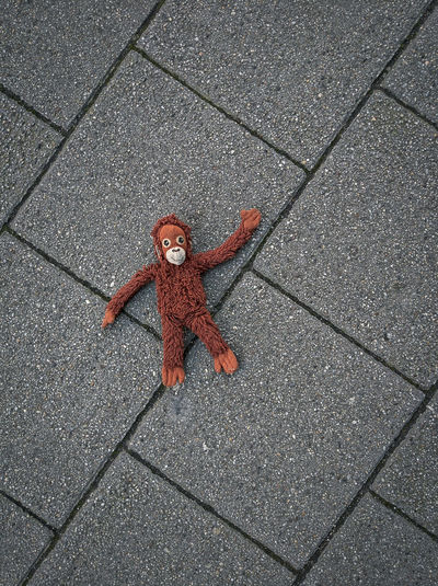 High angle view of red toy on floor