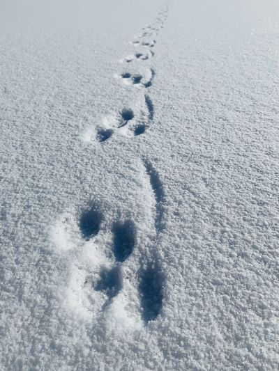 High angle view of footprints on snow covered field