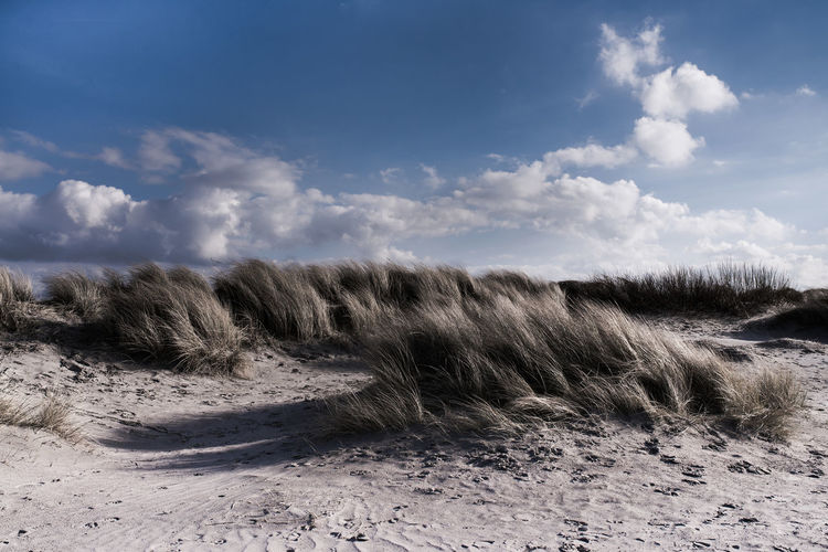 Beach Beauty In Nature Cloud - Sky Day Ecosystem  Landscape Marram Grass Nature No People Outdoors Sand Sand Dune Scenics Sky Tranquility Tree