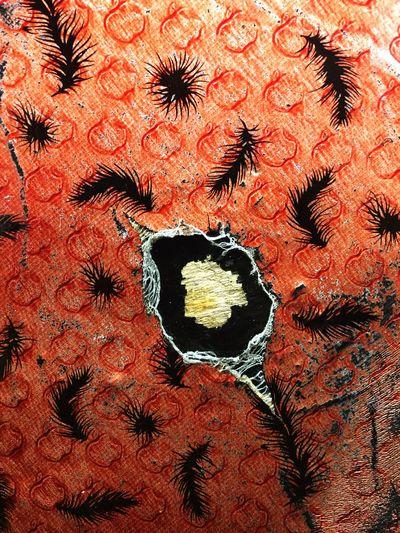 Full frame shot of orange flowers
