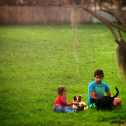 My babies playing with Kitty Cat, Cairo, and Doggy, Kelly, uncle Josué's house. Family Furry Family