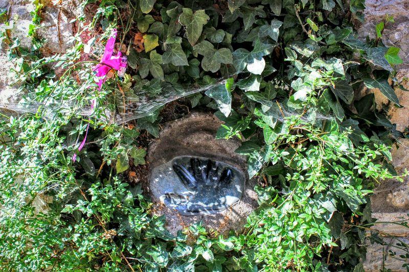 Glastonbury Hand Print In Stone Unusual Find Strange Something Different Greenery Flowers Ivy Cobweb