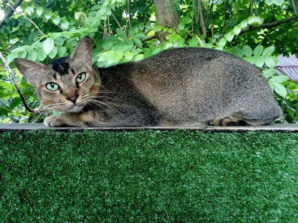 cat Leopard Feline Whisker Carnivora Animal Markings Stray Animal Cat