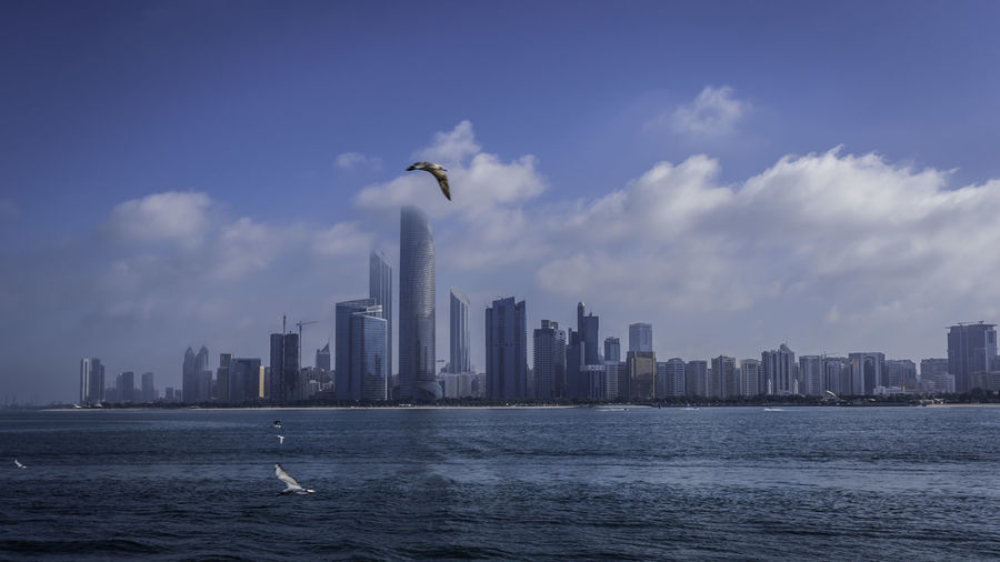 Seagulls flying over sea and buildings in city
