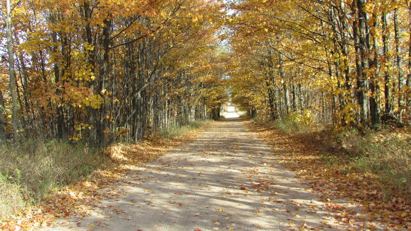 Fall Roads Bright Colors Enjoying Life Country Life Cadillac Pure Michigan