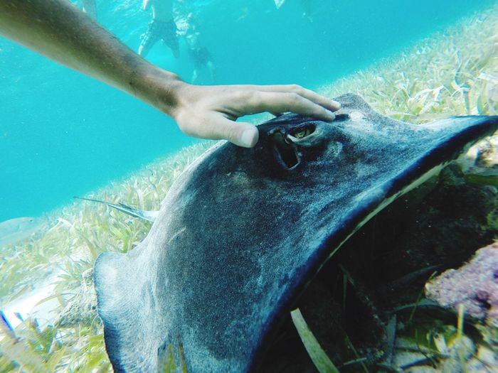 Cropped image of hand touching stingray in sea