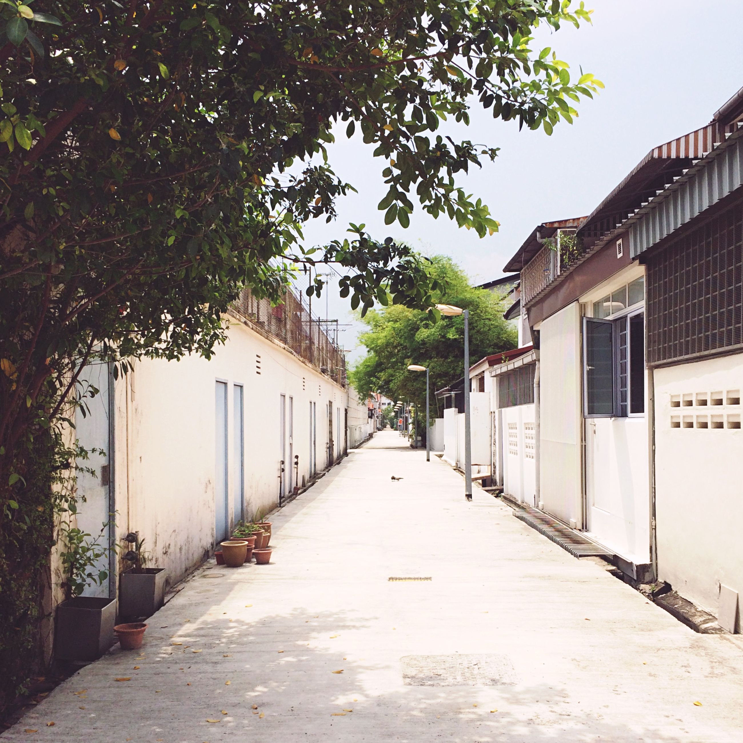 architecture, built structure, building exterior, the way forward, house, tree, diminishing perspective, residential structure, narrow, residential building, street, alley, building, vanishing point, empty, day, long, walkway, door, outdoors