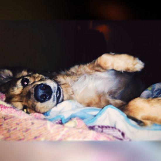 MiVida❤💚 Calabaza Cute Pets Dog❤ Martes Loamo ♥☺ Guatemala Volvi ✌