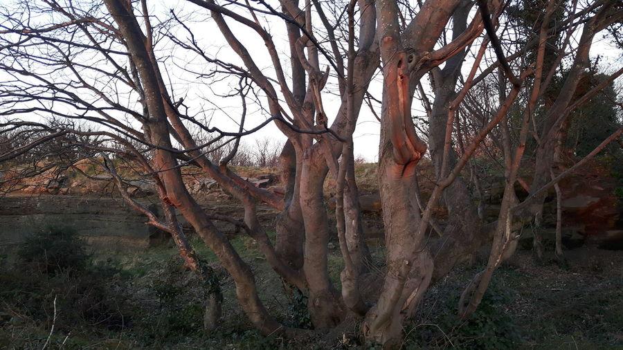 Dusk Woods Tree