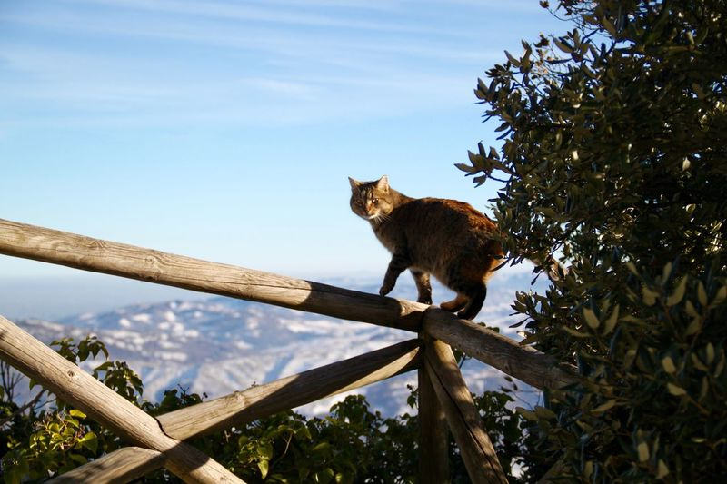 Love Animal Themes Cat Day Domestic Animals Domestic Cat Feline Fluffy Mammal Nature No People One Animal Outdoors San Marino Stray Cat Street Cat Winter Winter Wonderland Wintertime Monte Titano