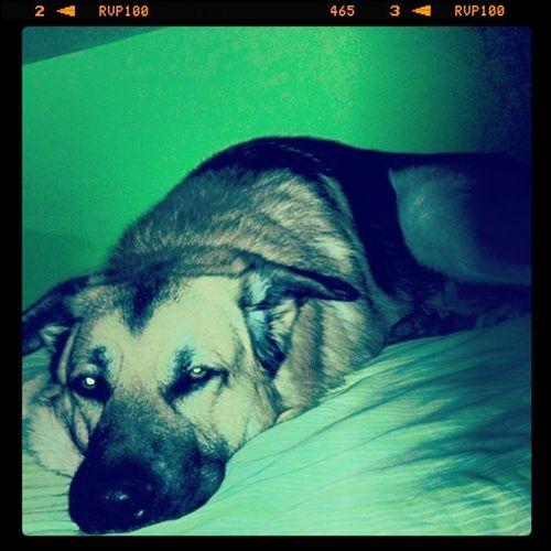 Dog Tired Complicatedlife Soot selfie news Deprimer du monde a venir Blows my mind or try at least ...