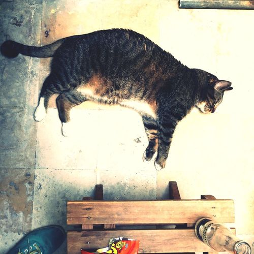 Chillin, chill in minding my busines... Cat Life
