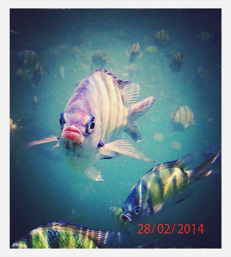Travel Thailand 2014