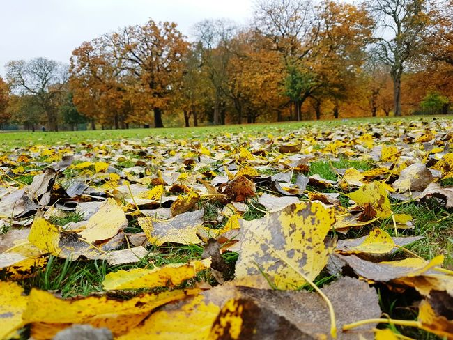 Got scattered into pieces. Emotions In A Picture Emotional Photography Nature Autumn Leaf Beauty In Nature No People Field Outdoors Scenics Nature Taking Photos Journey London Lifestyle United Kingdom