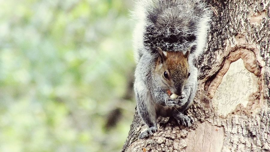 Ardi.lla Squirrel Photo By Agustín Orozco Díaz - 2015