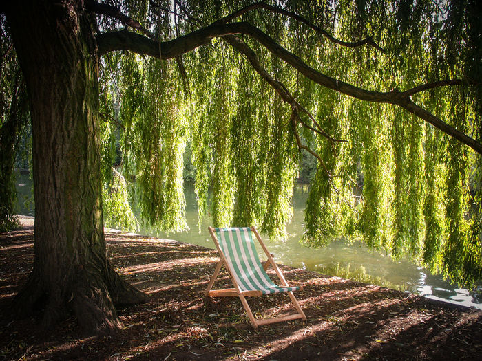 Deck Chair Inviting London Sit And Relax... Absence Beauty In Nature Chair Day Empty Green Color Growth Land Nature No People Outdoors Park Regents Park Relax Relaxation Sunlight Take A Break Tranquil Scene Tranquility Tree Tree Trunk