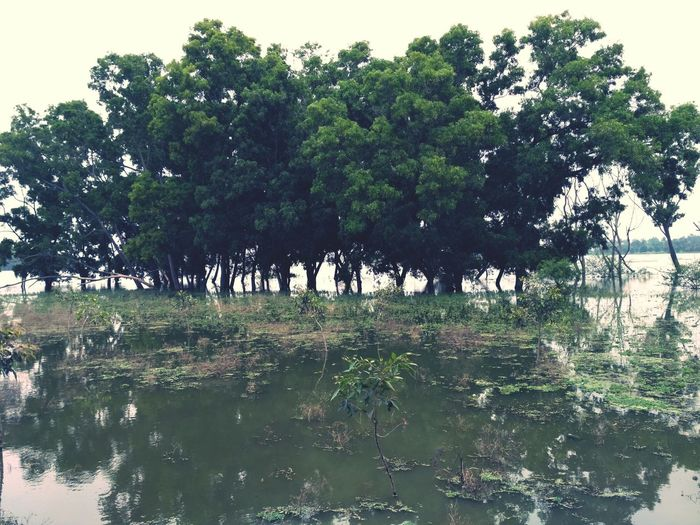 Tree Lake Nature Water No People Beauty In Nature Flood Branch