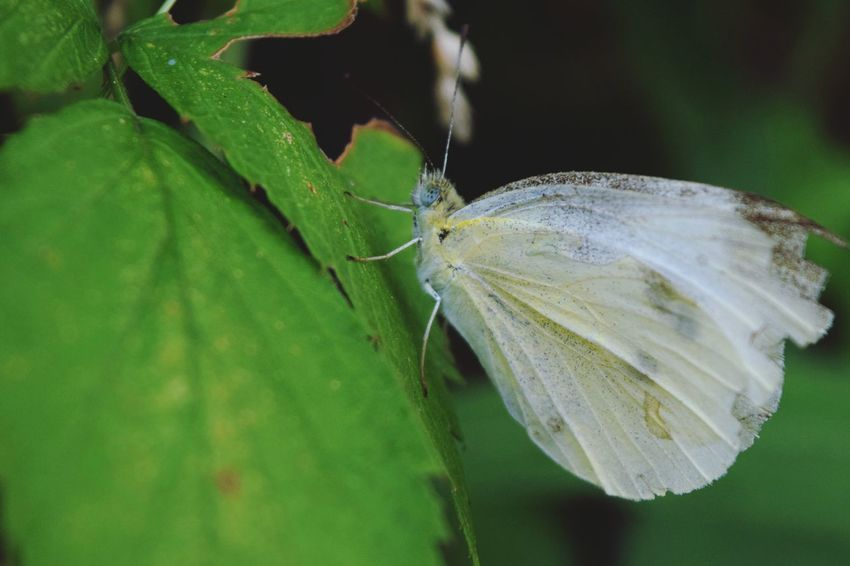 Moth Leaf Nature Nature_collection Nature Photography Nature Lover Wildlife Wildlife & Nature Wildlife Photography Little Guy Nikon D3300