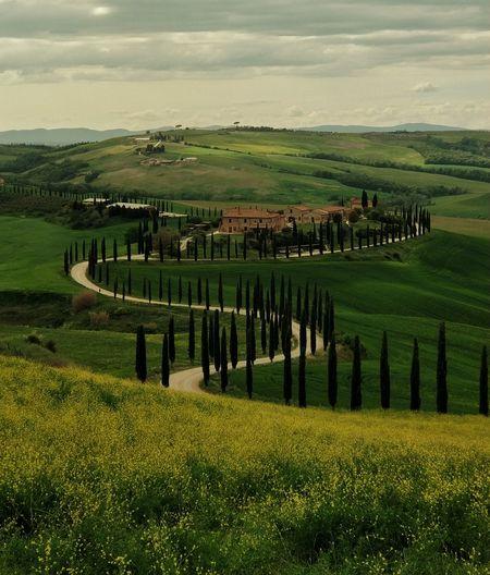 Tramonto Toscano Italy Italian Italia Toscana Toscany Tree Rural Scene Agriculture Field Cereal Plant Crop  Farm Rice Paddy Sky Landscape