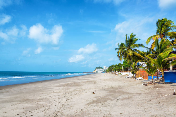 Long stretch of sandy beach lined by palm trees in Same, Ecuador Beach Beauty In Nature Blue Day Ecuador Horizon Over Water Landscape Nature Ocean Outdoors Pacific Pacific Ocean Palm Tree Same  Sand Scenics Sea South America Sunlight Tourism Travel Travel Destinations Tropical Climate Vacations Water