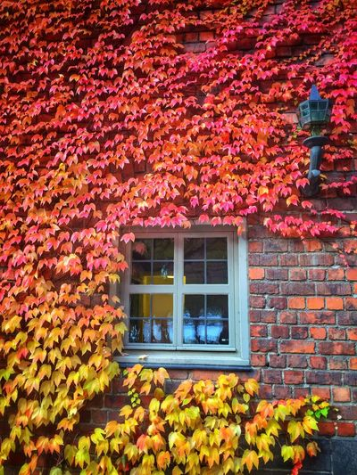 Colorful Sunday 🍂🍁 Colors Of Autumn From My Point Of View Autumn Nature Harmony Building Brick Window Colors Showcase: November