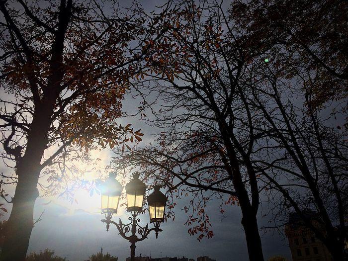 Paris Composition Trees City Sky Evening Enjoying Life EyeEm Nature Lover