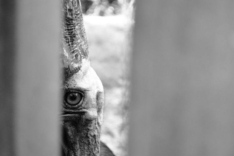 Close-Up Portrait Of Cassowary