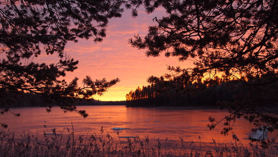 Ice Lapland Scandinavia Winter Beauty In Nature Branch Day Lake Landscape Nature No People Orange Color Outdoors Scenics Silhouette Sky Sunrise Sunrise_sunsets_aroundworld Sunset Tranquil Scene Tranquility Tree Shades Of Winter
