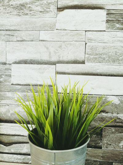 grass pot Beauty In Nature Indoors  Plant Green Color Tree Tranquility Grass Grass Photography Grasses Are Beautiful Too Grasses And Sun Grass Blades Rock Wall With Trees Wallpaper Wall Textures