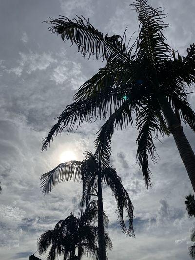 Three palm