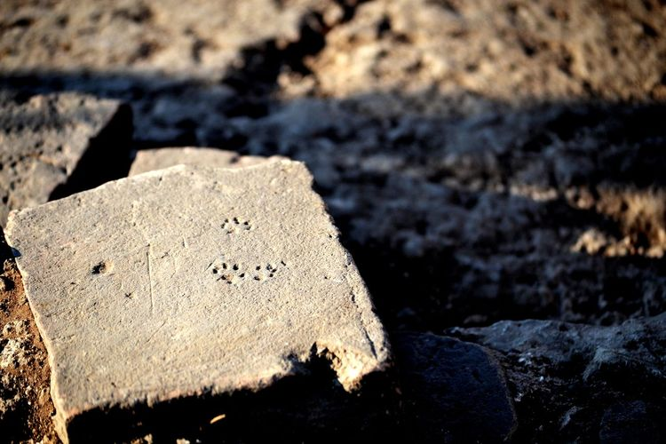 Cat Animals Archaeology Archaeological Sites Picoftheday Footprints Footprint Of The Cat Brick Light And Shadow EyeEm Selects Close-up EyeEmNewHere