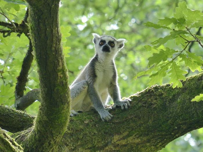 Portrait of squirrel on tree