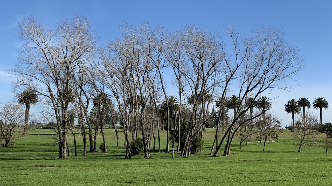 VIEW OF BARE TREES ON FIELD